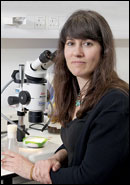 Prof. Andrea Brand, Gurdon Institute, Cambridge