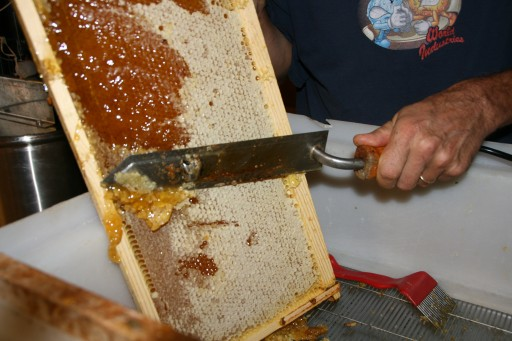 Shown is a frame of capped honey on which the wax cap is being removed prior to extraction. (Photo credit: http://www.dishingthedivine.com/2009/09/17/wont-you-bee-mine/)