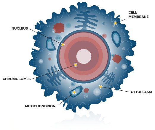 Diagram of the internal structures of the cell. (Image credit: https://genographic.nationalgeographic.com/science-behind/genetics-overview/)