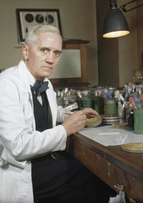 Professor Sir Alexander Fleming, discoverer of Penicilling at his laboratory at St Mary's, Paddington, London. (image from Wikipedia)