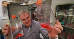 Prof Luke O'Neill with cell culture flasks in Trinity College Dublin. Photograph: Nick Bradshaw